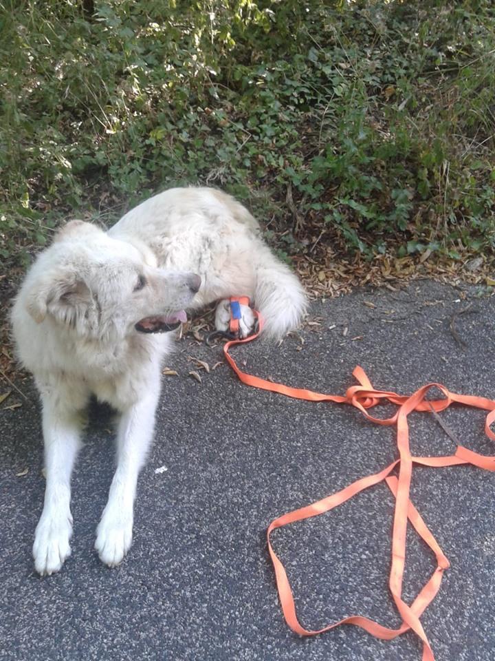 cane abbandonato a Roccagiovine